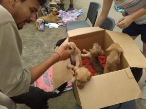 earthquake puppies