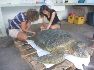 10_19_Parque Nacional Turtle (11)
