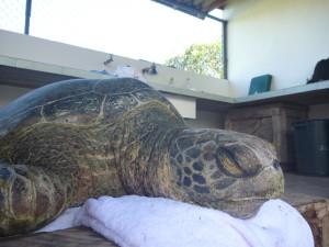 10_19_Parque Nacional Turtle (12)